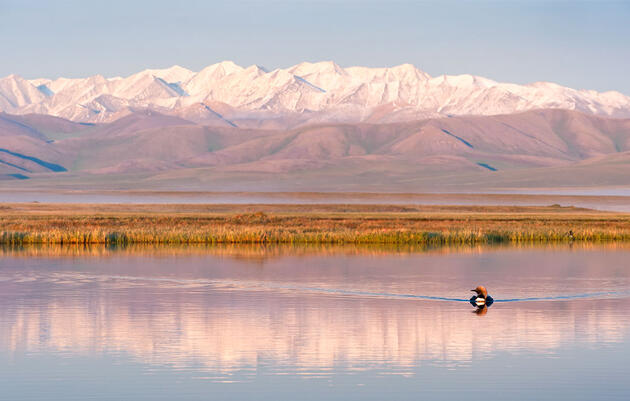 Report: The Arctic Refuge Is Facing Its Biggest Threat Yet