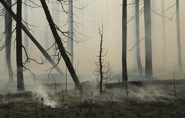 How Wildfires Affect Birds