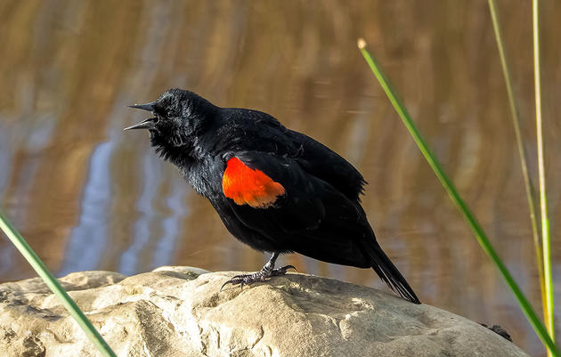 Warmer Weather Brings Record Sightings for This Year's Great Backyard Bird Count
