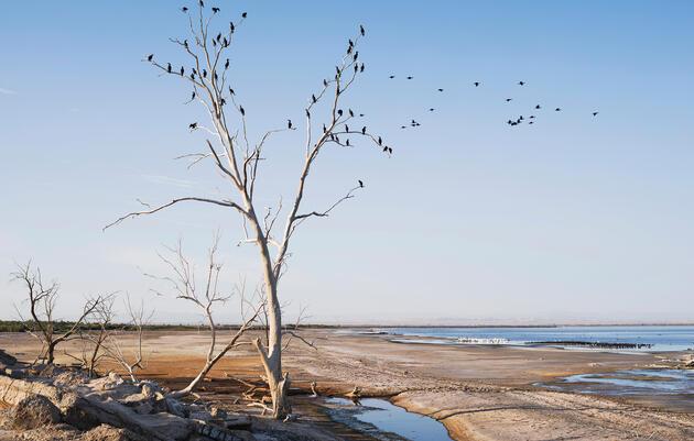 ¿Cómo podemos salvar el lago Saltón?