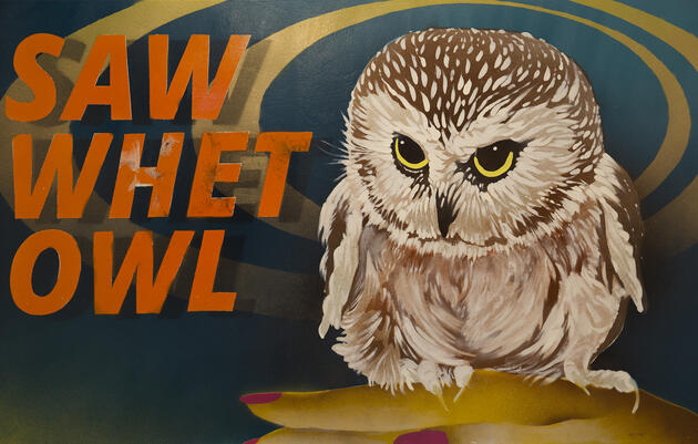 Northern Saw-whet Owl by Summer McClinton