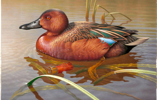 Duck Stamp Artists Turn to Spent Shotgun Shells to Meet New Pro-Hunting Mandate