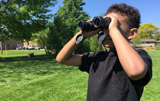 Wanted: Bird Teachers, No Minimum Age Requirement