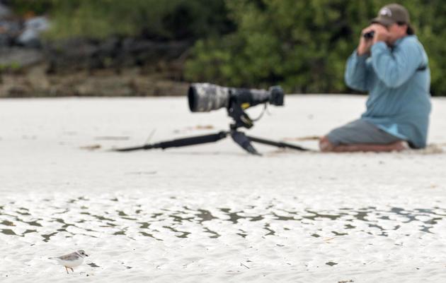 5 Pros on Taking Better Bird Photos