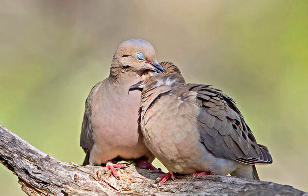What Valentine's Day Birds Can Tell You About Your Love Life