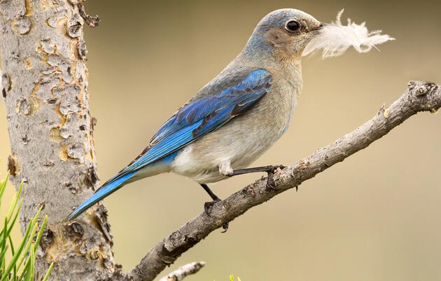 6 Other Birds That Will Benefit From Sagebrush Conservation