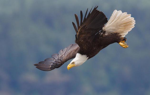 5 Audubon Birding Festivals to Hit Up This Winter