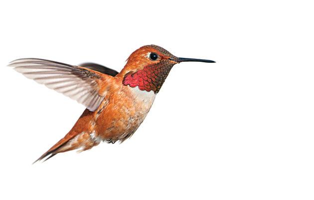 Celebrate Hummingbirds