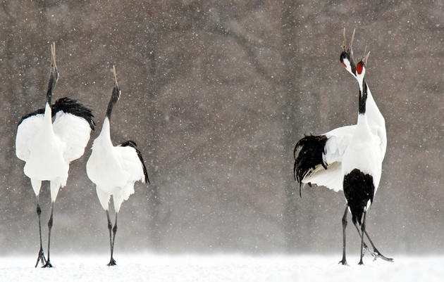 Global Birds Also at Risk from Climate Change