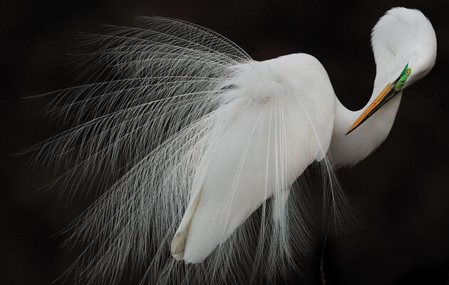 The 2015 Audubon Photography Awards Winners