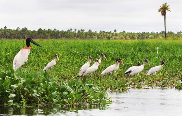 Turismo Ecológico en Paraguay
