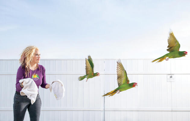 In this photo montage, Brooke Durham releases a trio of conures that ended up in her care after suffering broken wings or blows to the head from falling out of their nests. Tom Fowlks