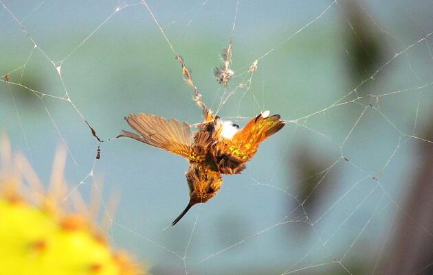 Which Animals Prey on Hummingbirds?