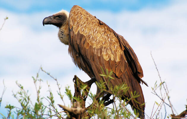 5 Ways the IUCN Red List Is Changing for Birds