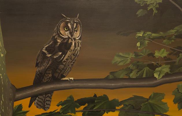 Long-eared Owl by Greg Burak