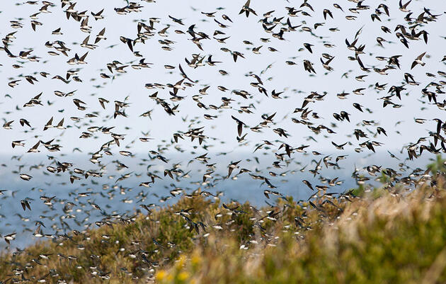 Here's Why So Many More Birds Migrate Through the Eastern United States