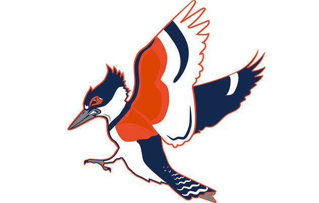 The University of Illinois Might Make a Kingfisher Its New Mascot. It should!