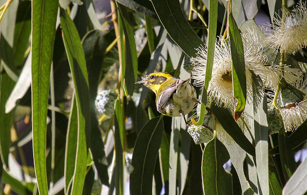 In Los Angeles, Rich Neighborhoods Enjoy More Street Trees and a Lot More Birds