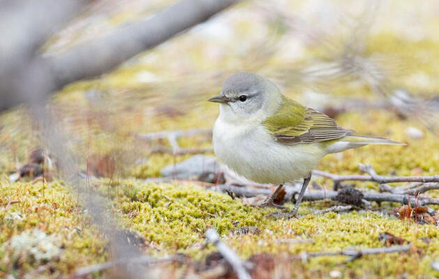 Incredible Combination of Factors Leads to Historic Migration Flight