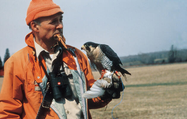 Listen to Tom Cade Recall Key Moments in the Effort to Save the Peregrine Falcon