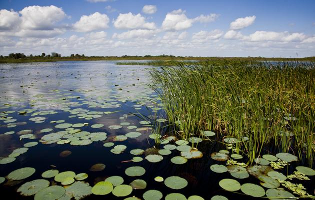 Video: Saving Lake Okeechobee