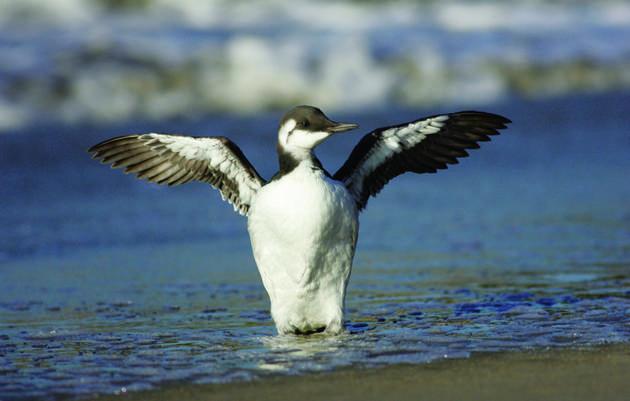 Audubon View: From Barrow to Baja