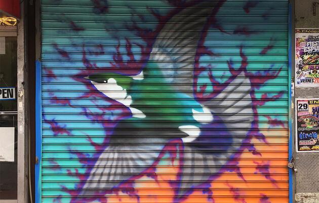 Violet-green Swallow by Christian Penn