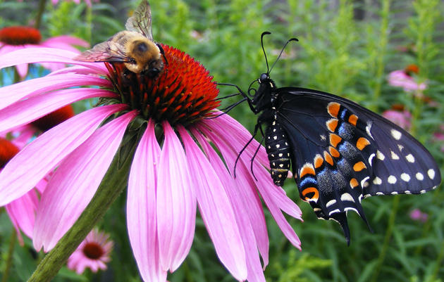 How to Buy Native Plants