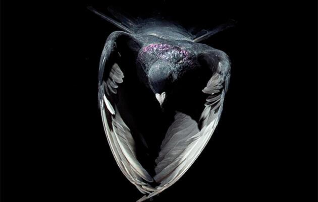 Birds as Pollution Detectors