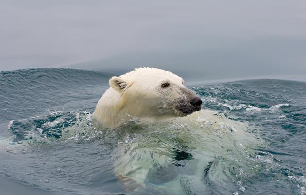 Polar Distress