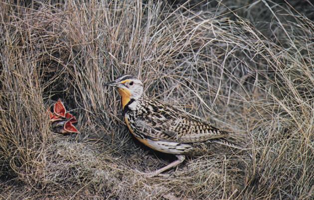 Audubon View