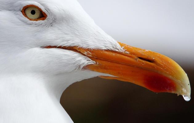 What Happens When Seabirds Drink Saltwater?