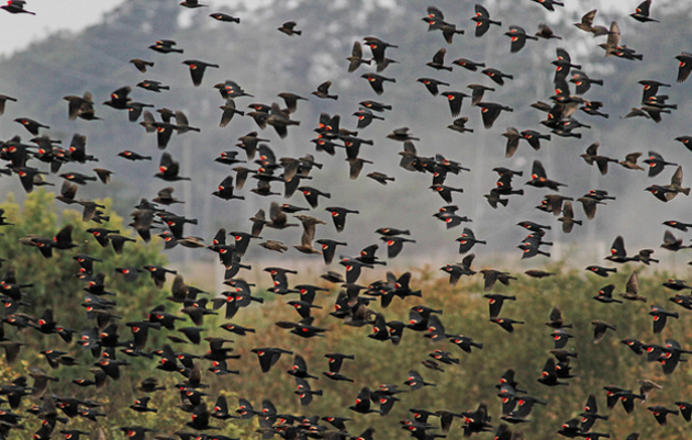 Farmers Delay Harvesting for Birds