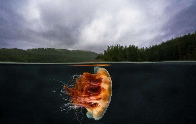 The Pacific Northwest's Underwater Wilderness