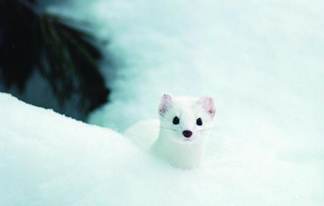 Life Under the Snow