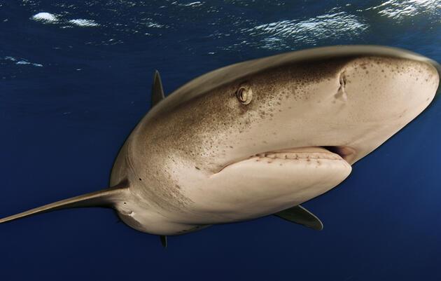 Longline Fishing's Unintended Victims: Billfish, Sharks, and Tuna