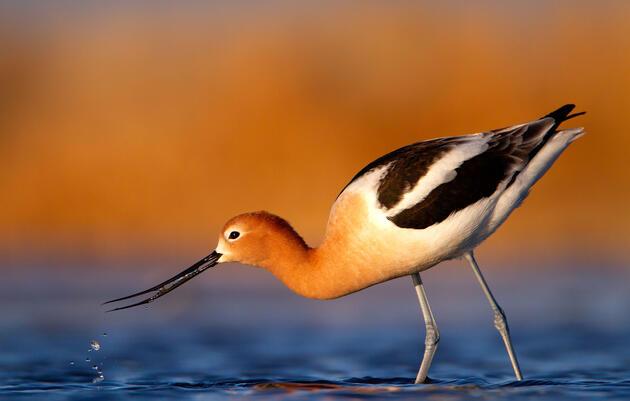 2020 Audubon Photography Contest Prizes