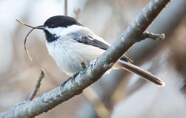 What's Got Bird Beaks in a Twist?