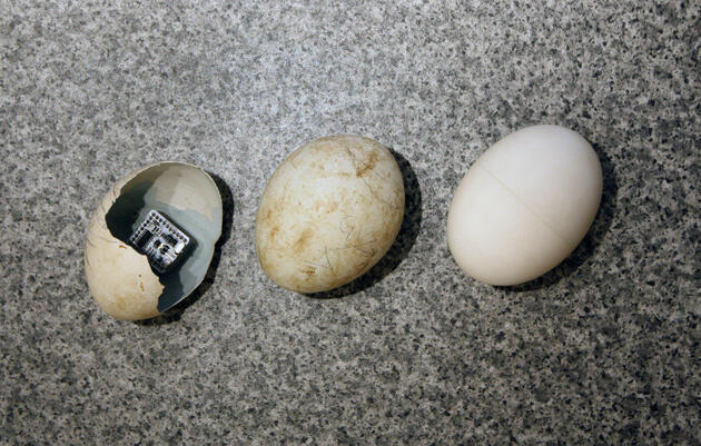 This 3-D-Printed Egg Could Help Us Bring More Baby Vultures Into The World