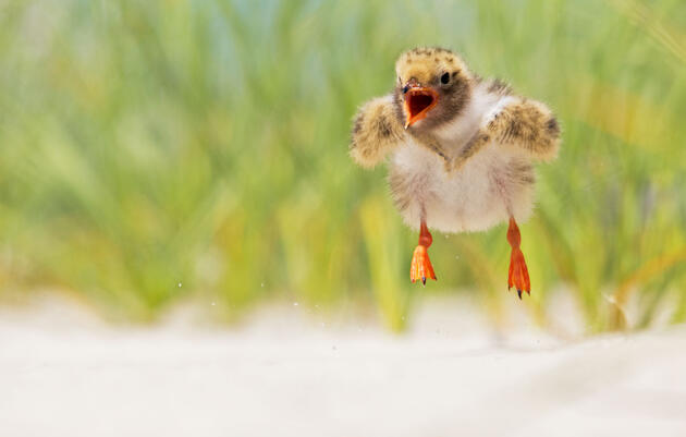 Follow These Pro Tips for Photographing Shorebirds