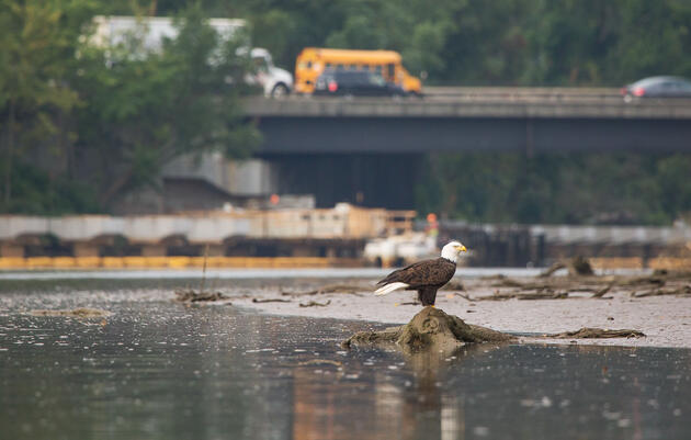 Why We Need a Strong EPA