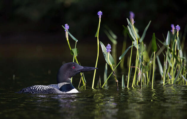 False Springs: How Earlier Spring With Climate Change Wreaks Havoc on Birds