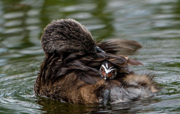 Audubon In Action