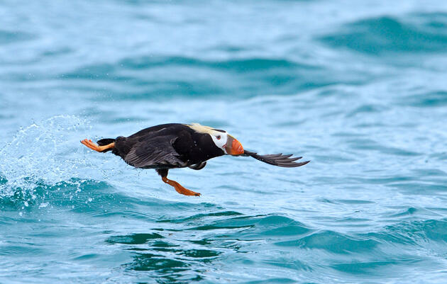 New Bill Would Put Seabirds at Risk