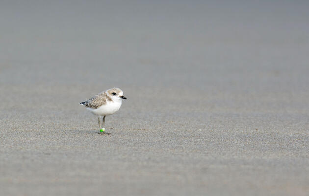As Hurricanes Increase in Intensity, How Will Birds Respond?