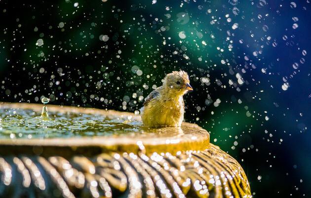 Cómo capturar el efecto de salpicadura en un baño de aves o una fuente