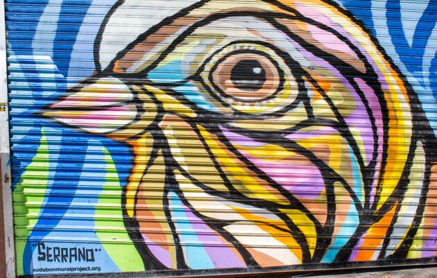 Baird's Sparrow by Ralph Serrano