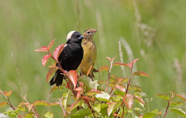 Audubon Chapters Support End to Ohio's Renewable Energy Freeze