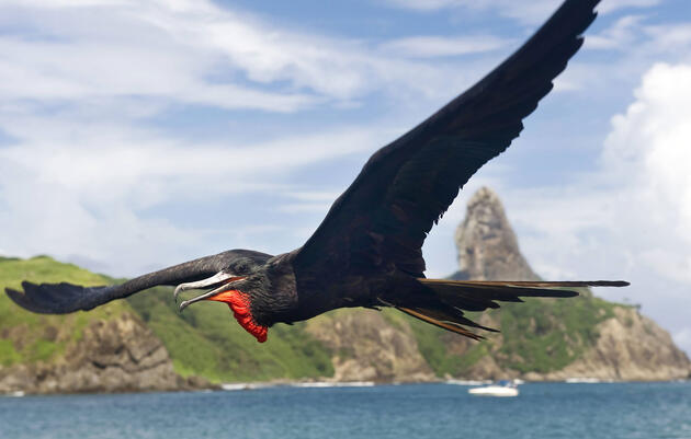 Why Frigatebirds Can't Float
