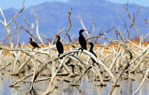 Arizona Legislature Wraps up with Wins for Birds, Water, and Public Lands